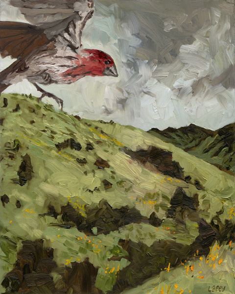 """House Finch  oil on panel 8""""x10"""""""